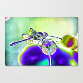 DRAGONFLY BLUE Canvas Print