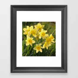 Yellow spring daffodil Photography Framed Art Print