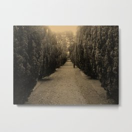 Tree Lined Metal Print