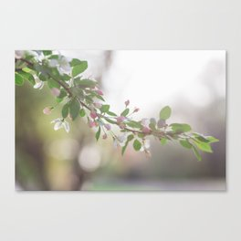 One spring evening Canvas Print