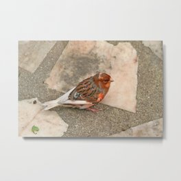 Lovely runaway canary bird Metal Print