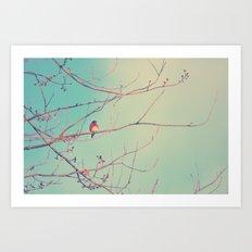 Bluebird Blue Art Print