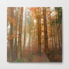 Trees in the Forest - Autumn Metal Print