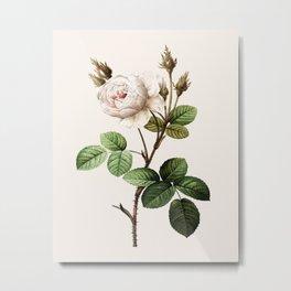 Vintage White Moss Rose Metal Print