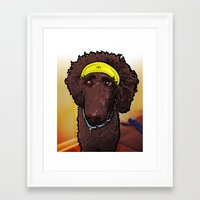 hobbes Framed Art Prints featuring Hobbes (poodle) by BinaryGod.com