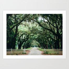 Southern Live Oak Art Print