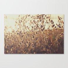 Field Sun Flare Canvas Print