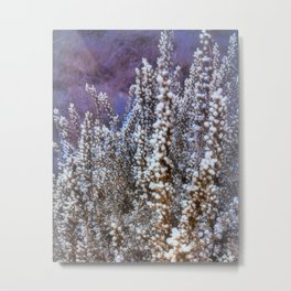 Frost On Heather And Wild Grasses Metal Print