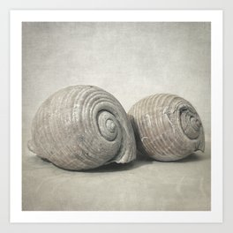 Seashell No.3 Art Print