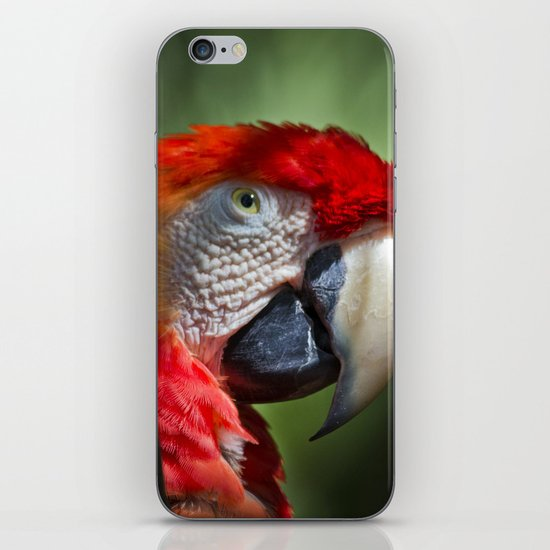 Scarlet Macaw iPhone & iPod Skin