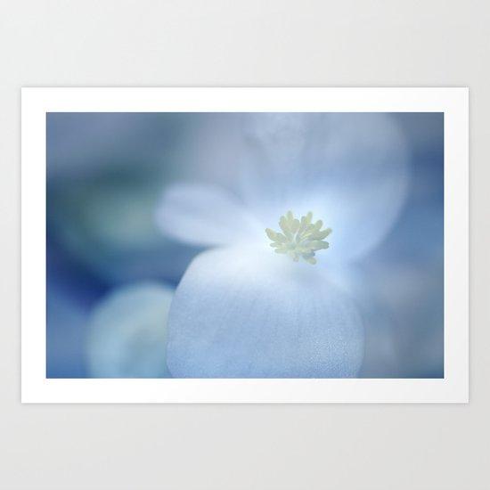 """""""Delicate white flower"""" Art Print"""