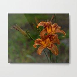 Ditch Lilies Metal Print