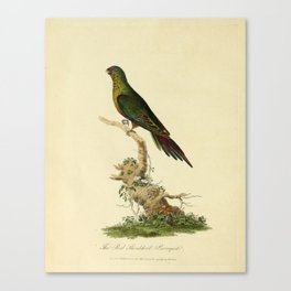 """""""The Red-Shouldered Paroquet"""" by Sarah Stone, 1790 Canvas Print"""