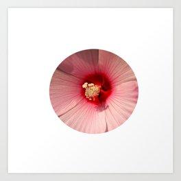 Pink Hibiscus Close-up Flower Photography Art Print
