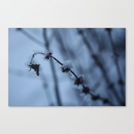 Ice Baby Canvas Print