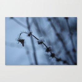 Ice Baby Canvas Print