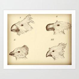 Darwin's Chocobos Art Print
