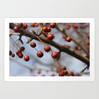 Berries of Winter Art Print