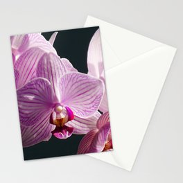 Pink and White Orchids in sunlight Stationery Cards