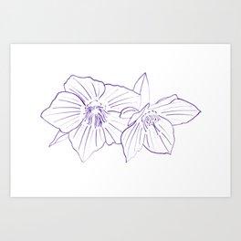 Purple Hellebores Art Print