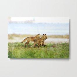 Curious Fox Pups Metal Print