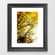 Morning Tree Tops Framed Art Print