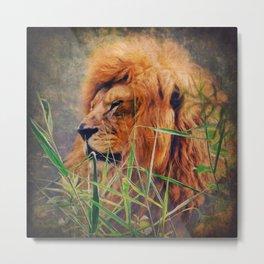A  Lion portrait Metal Print