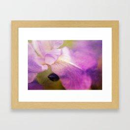 vintage iris Framed Art Print