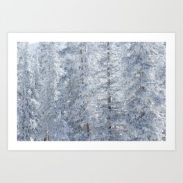 Colorado Woods Art Print