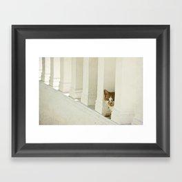 Little cat Framed Art Print