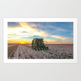 Cotton picker sunset. Art Print