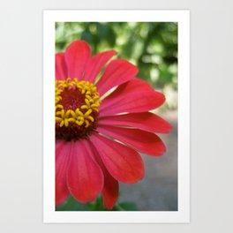 The Flower of the Garden Art Print