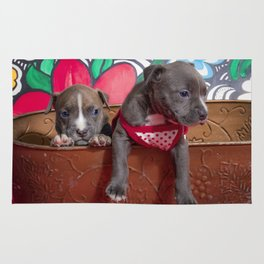 Cute Brother and Sister Pitbull Puppies with Blue Eyes Cuddling Together in a Spring Basket Rug