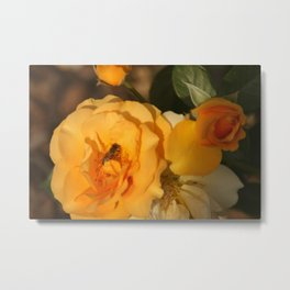 Rose with a guest Metal Print
