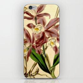 Cattleya intermedia iPhone Skin