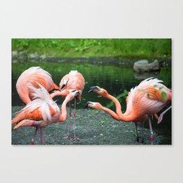Pink Argument Canvas Print
