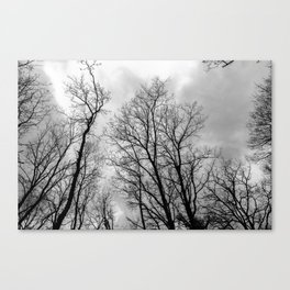 Creepy black and white trees Canvas Print