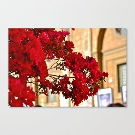 Flowers (Rome, Italy) Canvas Print