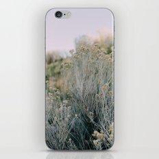 Desert Blush iPhone & iPod Skin