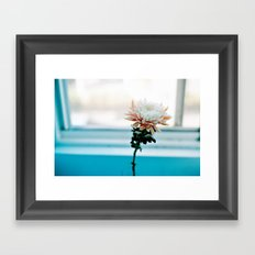 White and Pink Chrysanthemum Framed Art Print