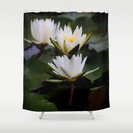 White Lily Flowers In A Pond With Green Lily Pads Shower Curtain