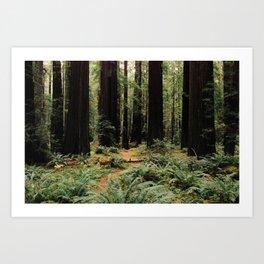 Deer in Redwood Forest Art Print
