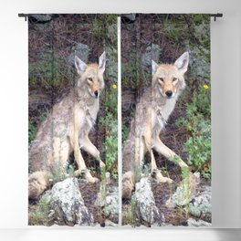 Watercolor Coyote 04, Wild Forest Dog Blackout Curtain