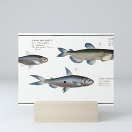 1. Capelin (Salmo groenlandicus) 2. Tail-spotted Salmon (Salmo melanurus) 3. Curimate (Salmo unimacu Mini Art Print