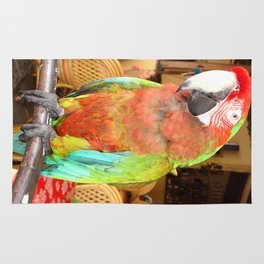 Harlequin Macaw On A Perch Rug