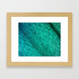 Blue Microscopic Plant Cells Framed Art Print