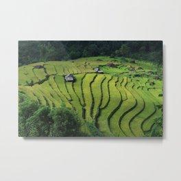 Landscape Terraced Fields Vietnam Vietnam Rice Metal Print