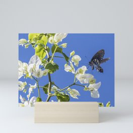 Pipevine Swallowtail Mini Art Print