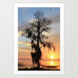 Sunrise Cypress Art Print