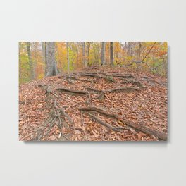 Autumn Avalon Forest Trail Metal Print